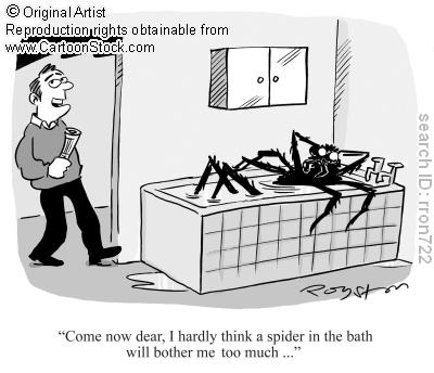 spider in tub